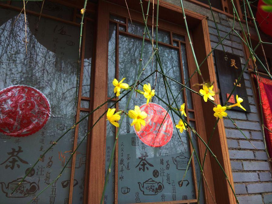 照片帖(913)灵山拍拍迎春花