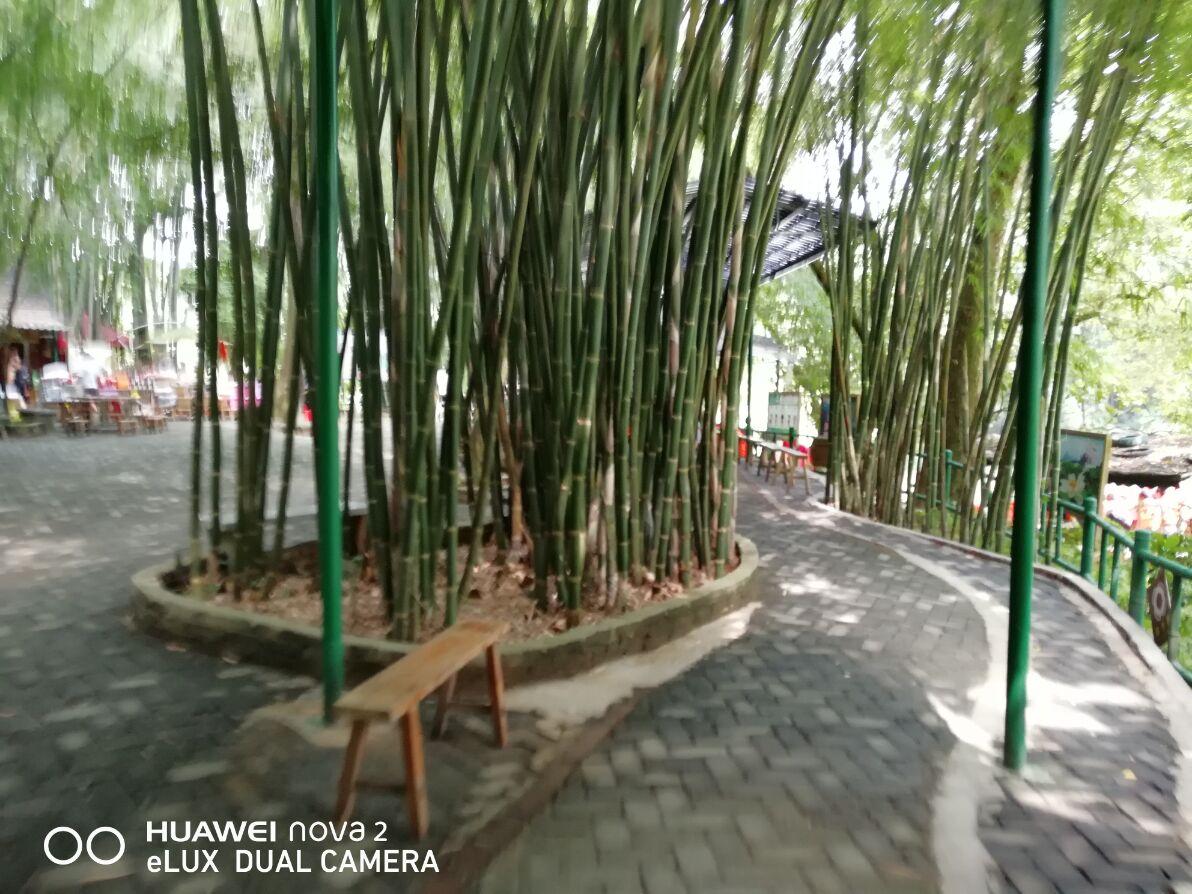 照片帖(10*69):广东英德洞天仙境的竹林风光。